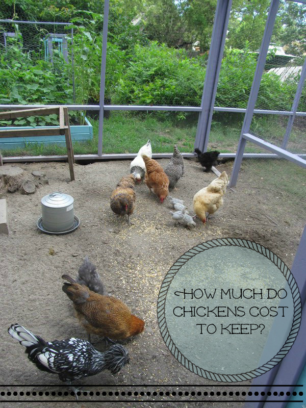 How much do chickens cost to keep for How much does it cost to build a dog house