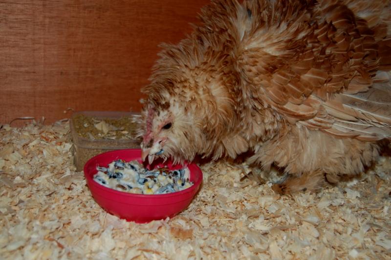 Chicken Comfort Food