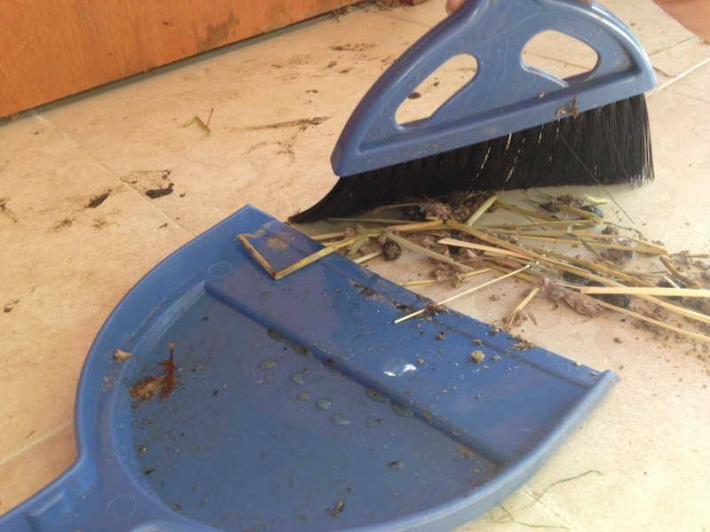 How much time do Angoras require? Basic rabbit keeping chores