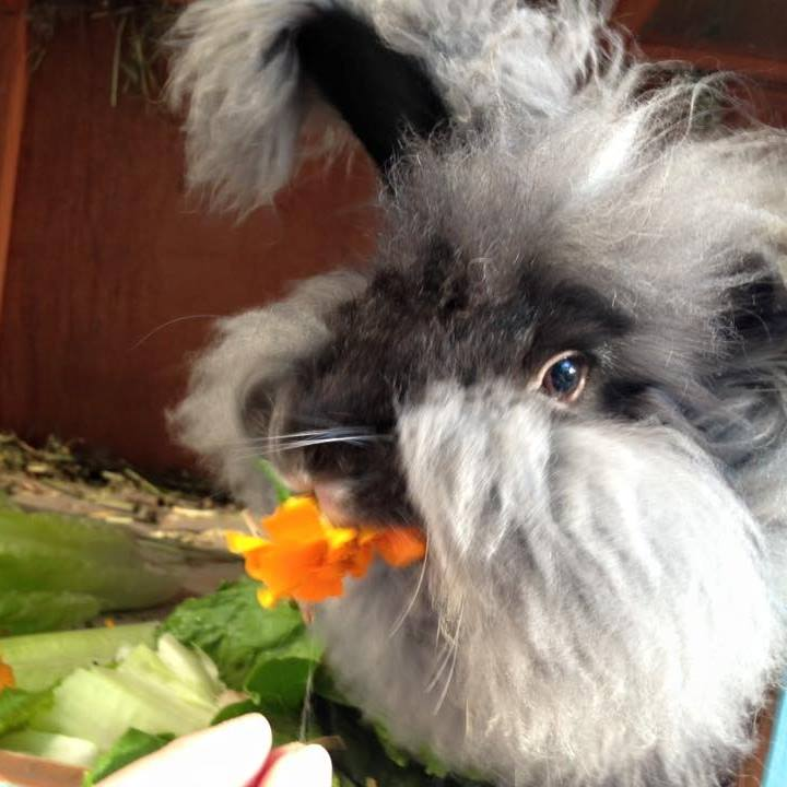 Gardening for your pets & livestock