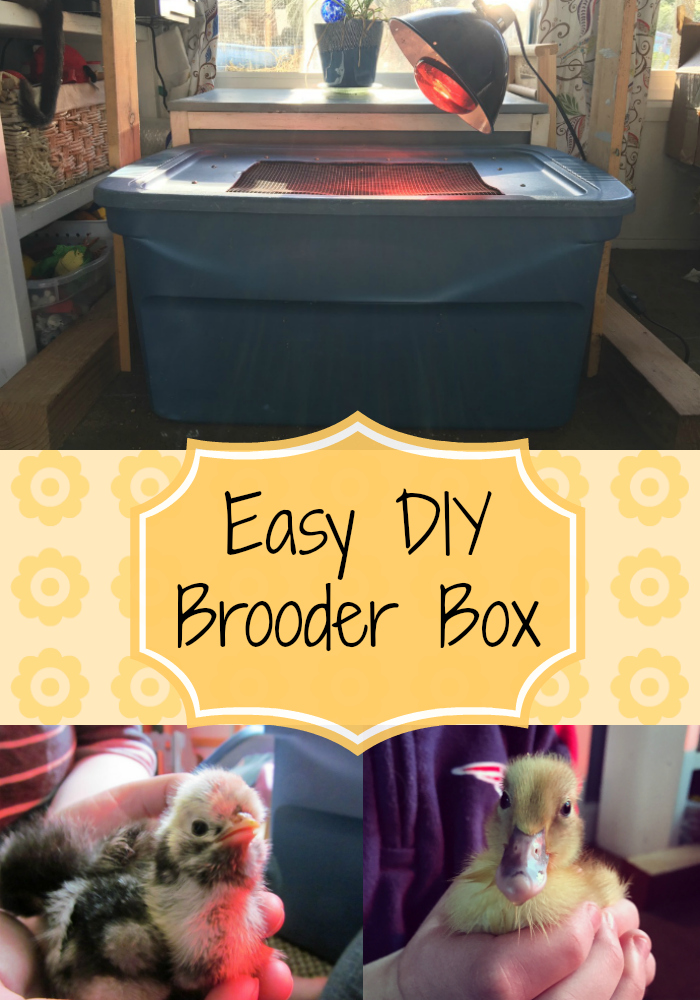 Diy Brooder Box The Cape Coop