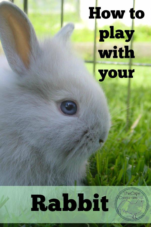 DIY Bunny Rabbit Kit For Adult