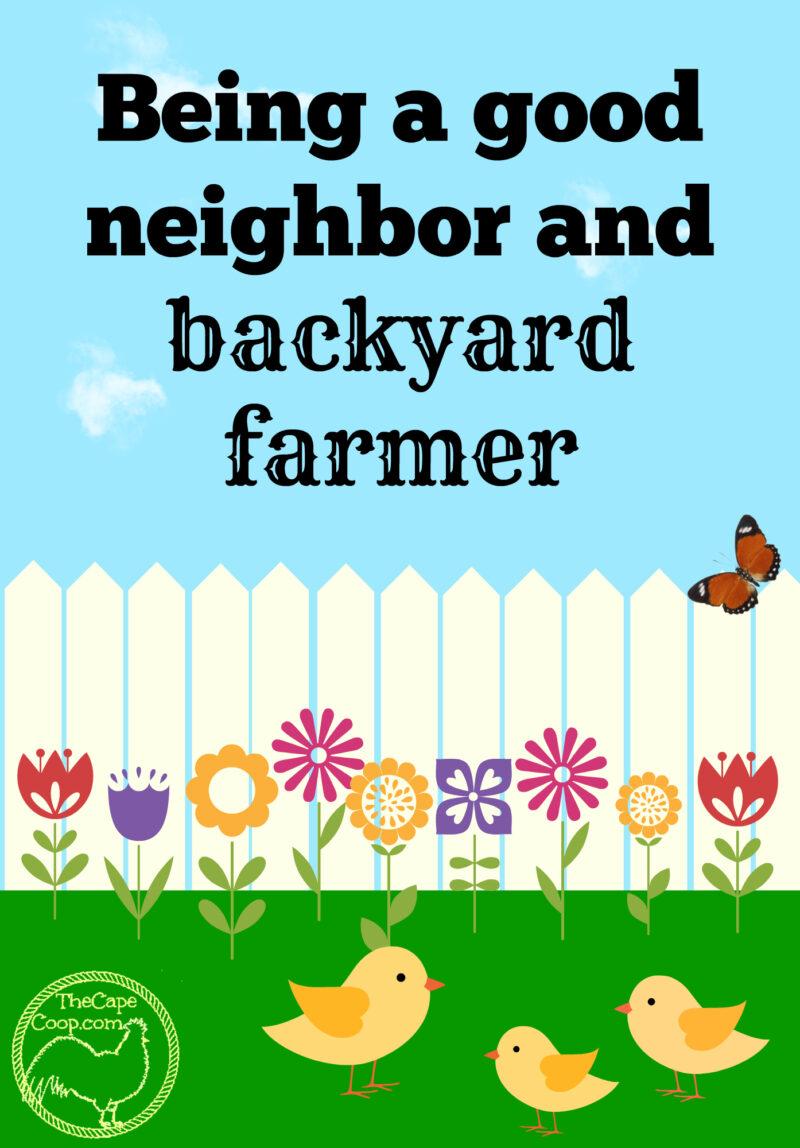 being a good neighborhood farmer the cape coop