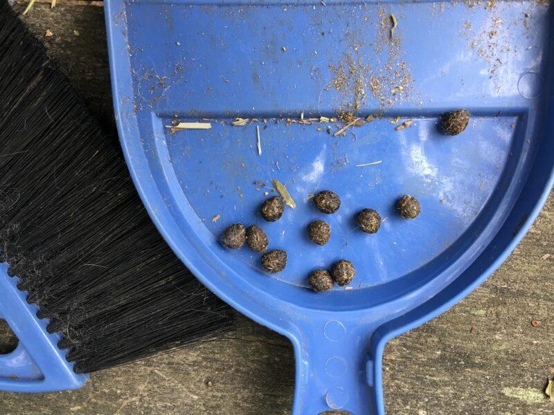 the scoop on rabbit poop